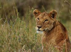 6 Day Safari to See Migration Crossing Mara River Tour