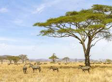 4 Day Safari to See the Great Migration Tour
