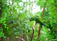 Amazon Jungle (Air-Conditioned) - 4 Days Tour