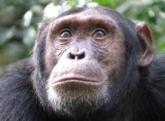 Gorillas, Chimps and Savannah Wildlife Tour
