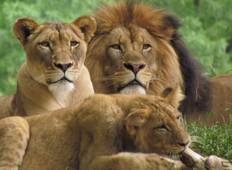 4 Days Masai Mara & Lake Nakuru Budget Camping Wildlife Safari Tour