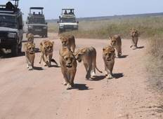 3 Days in Serengeti & The Ngorongoro crater private tour Tour
