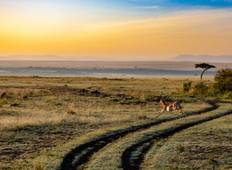 Ruaha Safari - 3 Days 2 Nights Tour