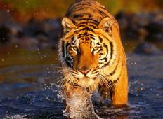 Golden Triangle with Ranthambore : History Taj Tigers 5 Days Tour