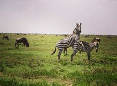 4 days camping tour to best wildlife parks in Tanzania Tour
