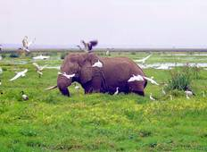 3 Days Amboseli - Nairobi Tour
