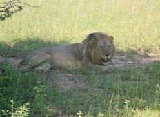 Best Tanzania Safari Departs every Friday Tour