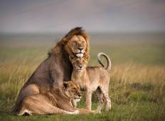 3 Days Classic Masai Mara Safari Offer 2019/2020 Tour