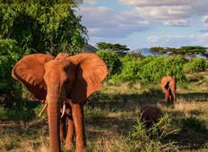 Wonders of Kenya Tour