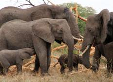 4 days, 3 Nights Tanzania Joining Group Safari Tour 600 USD Tour