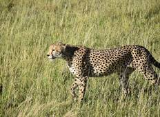 5 Days, 4 Nights Tanzania Joining Group Safari Tour 800 usd Tour