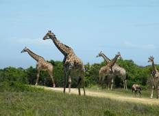 5 Days, 4 Nights Budget Camping Safari Tour Tanzania 1200 usd Tour