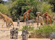 Tarangire, Serengeti & Ngorongoro - 5 Days Tour