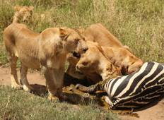 6 Days, 5 Nights Tanzania Budget Camping Safari Tour 1500 usd Tour