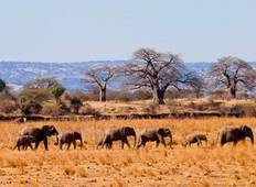 Tanzania Group Safari - 9 Days Tour