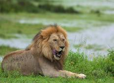 10 Days, 9 Nights Tanzania Budget Mid-range Safari Tour Tanzania  Tour