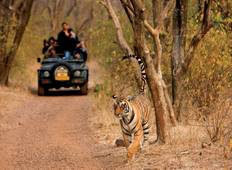 Golden Triangle with Wildlife 7N/8D Tour