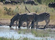 11 Days Delta Savannah Safari Tour