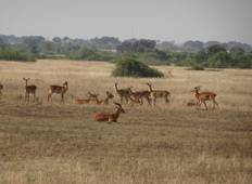 3-Day Murchison Falls Vacation Including Big 5 animals Tour