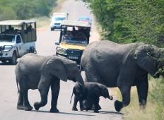 Kruger National Park 3 Days 2 Nights Magical Safari from Johannesburg Tour