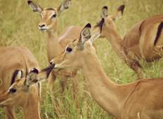 10 Days 9 Nights, Perfect Family Getaway  Tour to Tanzania Tour