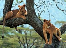 11 Days 10 Nights, Classic Luxury Safari Tour Tanzania  Tour