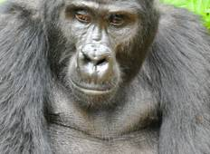 15 Days Uganda Gorilla and Game safari holiday Tour