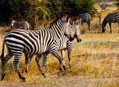 Fantastische Wildlife Safari zum Queen Elizabeth Nationalpark & Lake Mburo Nationalpark - 4 Tage Rundreise
