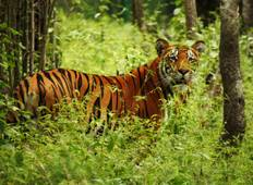 Chitwan Jungle Safari 2 Night 3 Days Tour