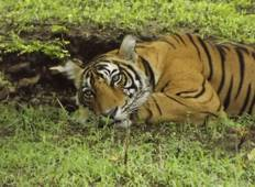6 Days - Golden Triangle With Ranthambore Wildlife & Bird Sanctuary - Delhi - Agra - Jaipur - Ranthambore - Delhi  Tour