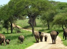 Tanzania Fun Safari  Tour
