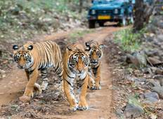 4- Day Golden Triangle with Ranthambore Tour