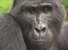 4 Days Gorilla Habituation And Lake Mburo National Park Tour Tour