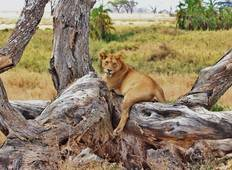6 Days Tarangire, Serengeti, Ngorongoro Crater & Lake Manyara Tour
