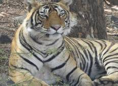 Car & Driver For Delhi Agra & Jaipur with Ranthambore National Park Excursion on 5 Days Golden Triangle India Trip Tour