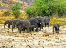4 Days Camping Safaris Tour