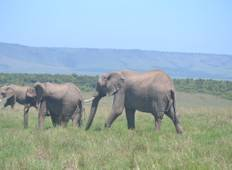 10 Days Discover Kenya Tour in Luxury Lodges    Tour