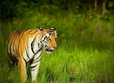 10 Days Jungle Book Experience in Kanha, Pench and Satpura National Park Tour