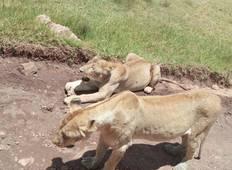 5 day safari to Africa leading National Parks. (Serengeti, Ngorongoro & Lake Manyara) Tour