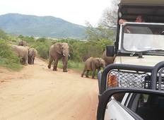 3 Days Pilanesberg Safari With Sun City Tour