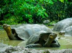 The 5 Days Galapagos on a Budget Experience Tour