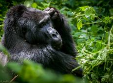 Four Days Bwindi National Park Tour