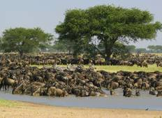 "5 Days ""Wild\"" Serengeti with the Big Five Tour"