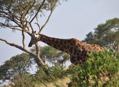 Murchison Falls\' Big 5s and the Chimpanzees Tour
