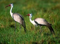 Ethiopian Bird Watching Tour (9 destinations) Tour