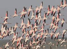Rift valley Lakes Bird Watching Tour  Tour