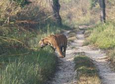 Luxury Wildlife Jungle Safari Adventure in Nepal- 7N/8D Tour