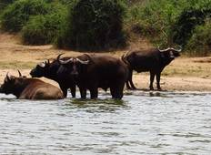 Queen Elizabeth und Murchison Falls Safari in Uganda - 5 Tage  Rundreise