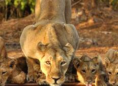 Car & Driver For Ahmedabad - Gir National Park 2 Nights 3 Days Trip with Ahmedabad Drop Tour