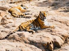 Golden traingle with ranthambore Tour